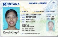 Montana Drivers license