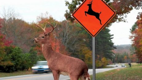 driving with wildlife